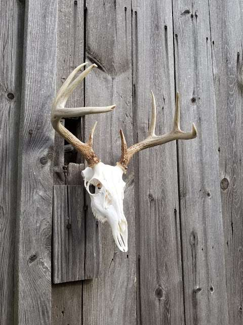 Outdoors Always Taxidermy